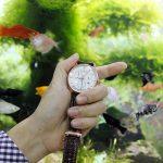 Giá đồng hồ Reef Tiger bao nhiêu tiền? nên mua ở đâu?